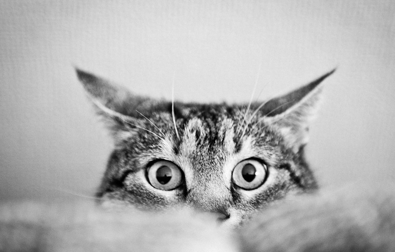 Wallpaper White Cat Beautiful Animal Cute Images For Desktop Section Koshki Download