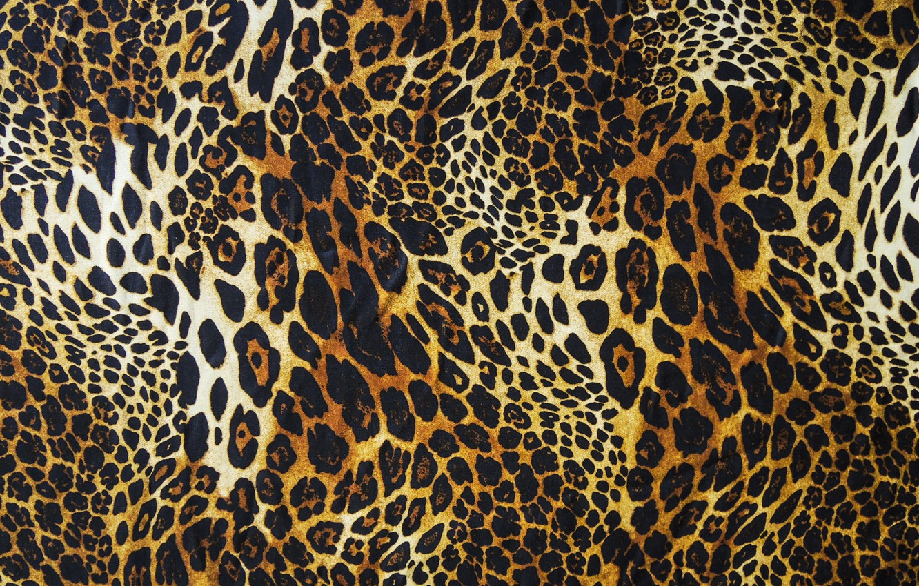 Photo wallpaper wool, leopard, skin, fur, texture