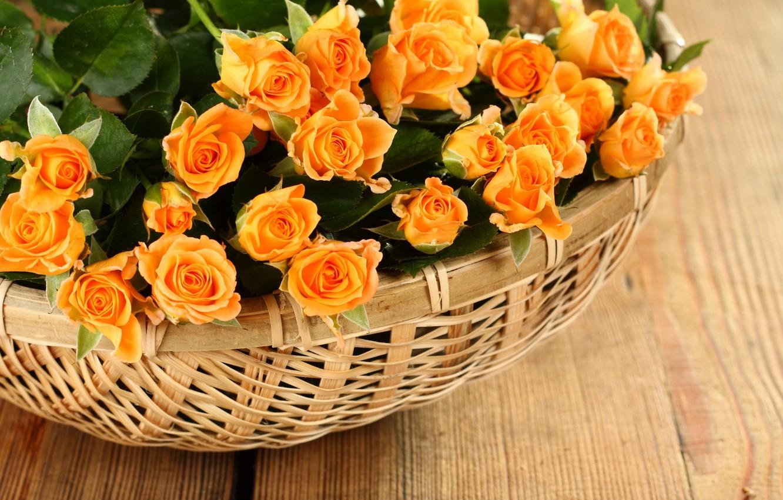 Photo wallpaper roses, petals, rose, flowers, petals, roses, basket, basket