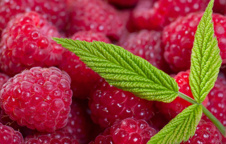 Photo wallpaper summer, leaves, macro, berries, raspberry, leaf