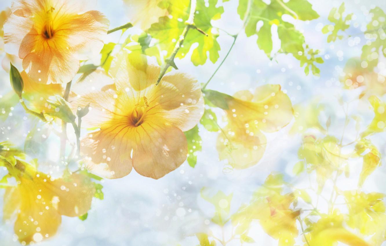 Photo wallpaper flowers, life, beautiful