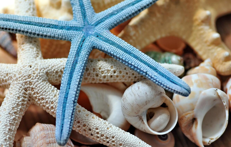 Photo wallpaper macro, shell, starfish