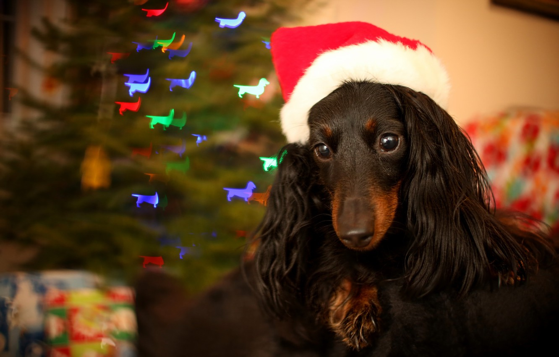 Photo wallpaper background, holiday, dog