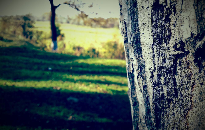 Photo wallpaper grass, nature, tree