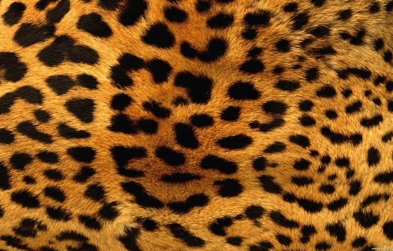 Photo wallpaper texture, leopard, fur