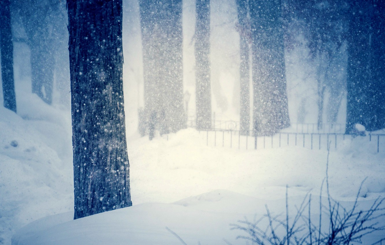 Photo wallpaper cold, winter, snow, trees, snowflakes, nature, background, tree, widescreen, Wallpaper, blur, the snow, wallpaper, trees, …