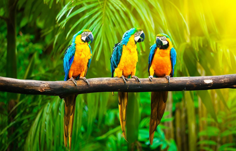 Photo wallpaper light, colored, branch, jungle, color, parrots, trio