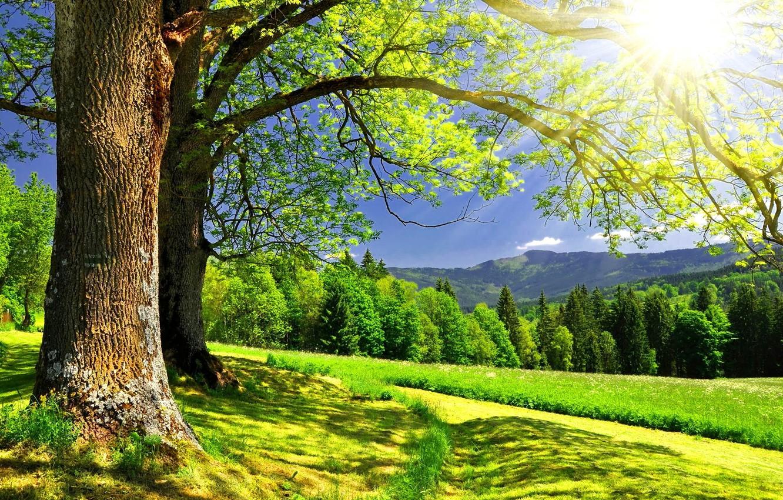 Photo wallpaper forest, summer, trees, landscape, mountains, sun.