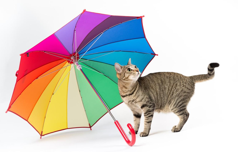 Photo wallpaper cat, umbrella, white background