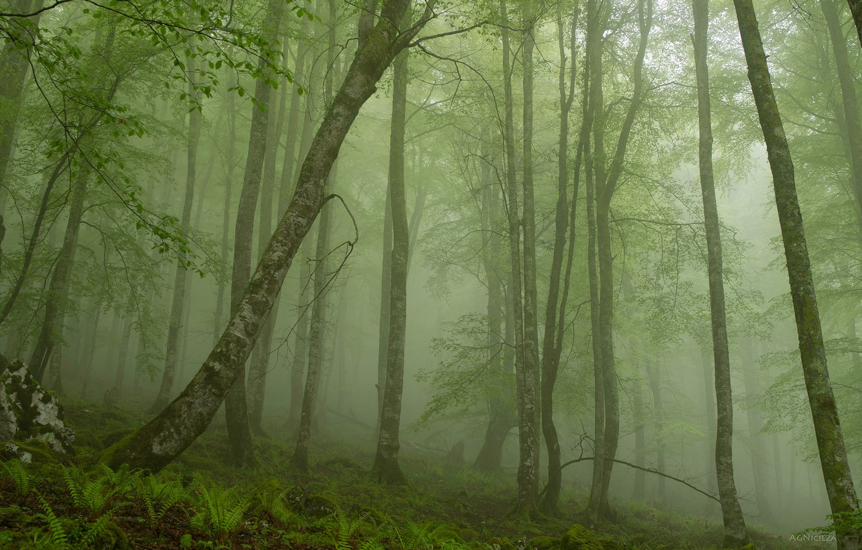 Photo wallpaper forest, nature, spring, green haze