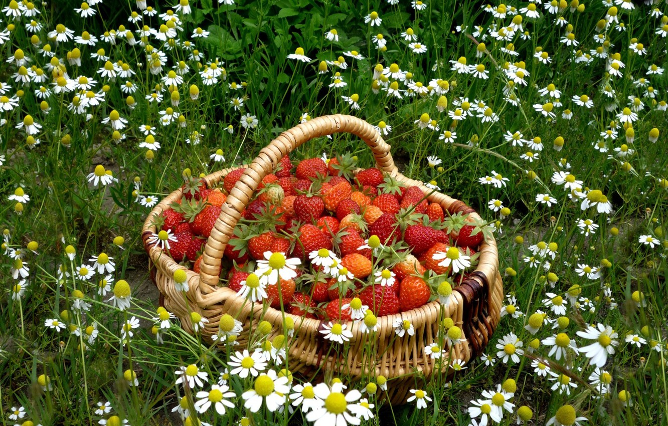 Photo wallpaper BACKGROUND, GRASS, RED, STRAWBERRY, CHAMOMILE, FOOD, BASKET