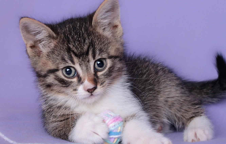 Photo wallpaper look, tangle, baby, kitty