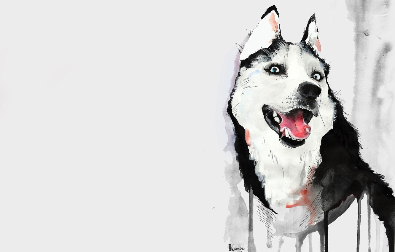 Photo wallpaper language, figure, dog, watercolor, husky, husky