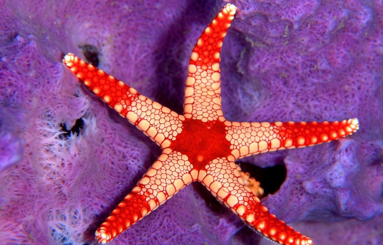 Photo wallpaper red, star, Sea