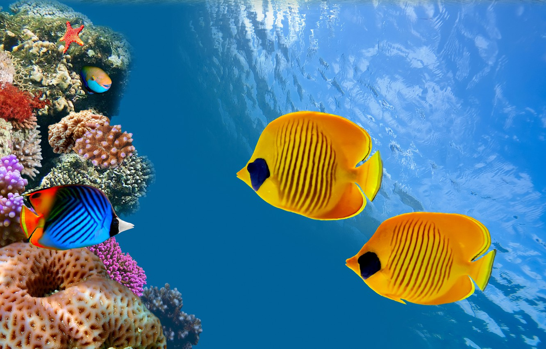 Photo wallpaper the ocean, fish, Thailand, Thailand, under water, underwater, ocean, reef, fish, reef, colonies of corals, …