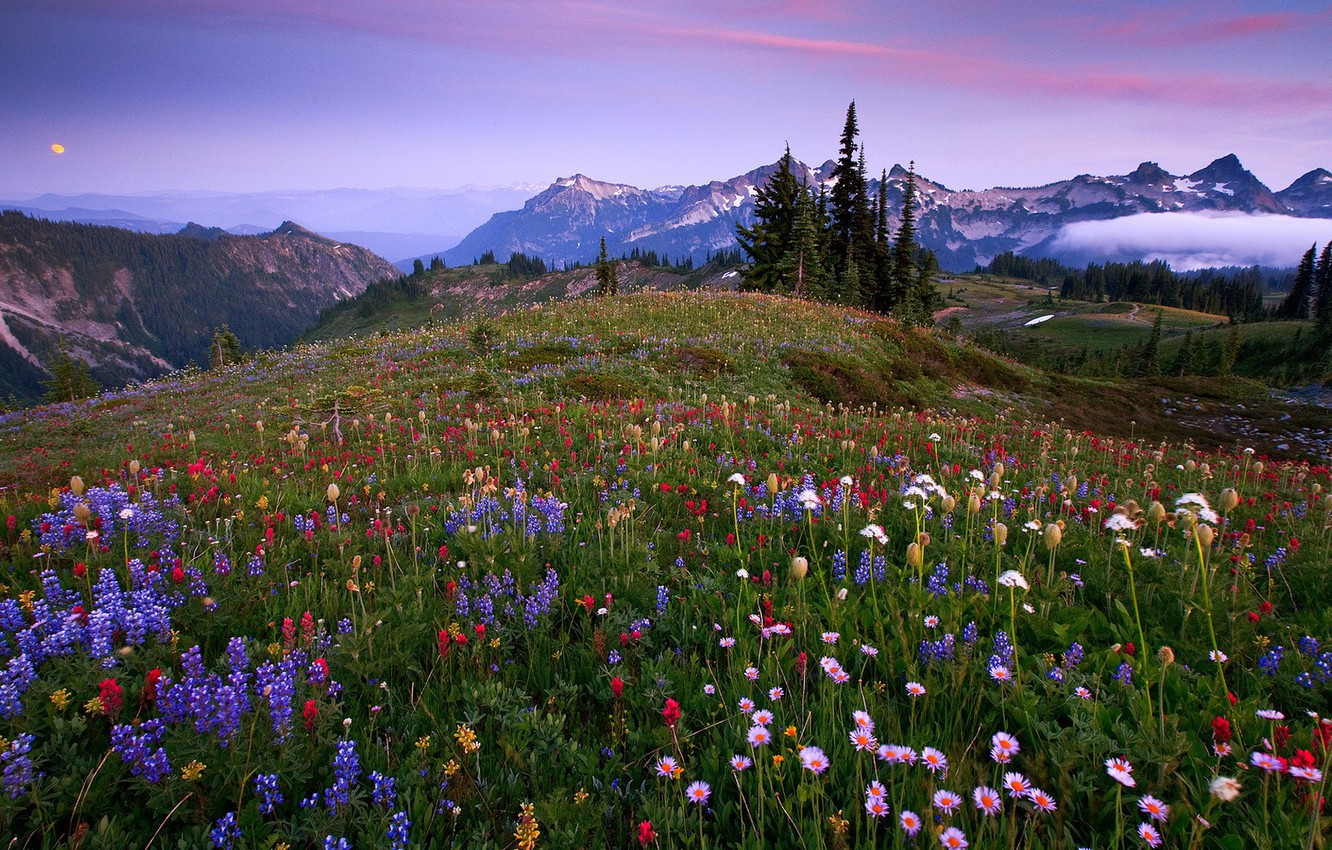 Photo wallpaper grass, trees, flowers, mountains