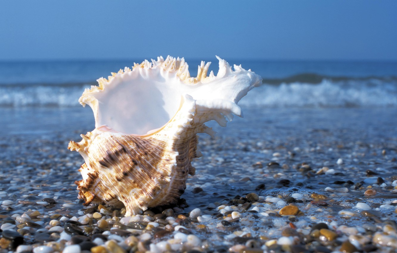Photo wallpaper sea, wave, summer, water, stones, shore, sink, shell, pebbles
