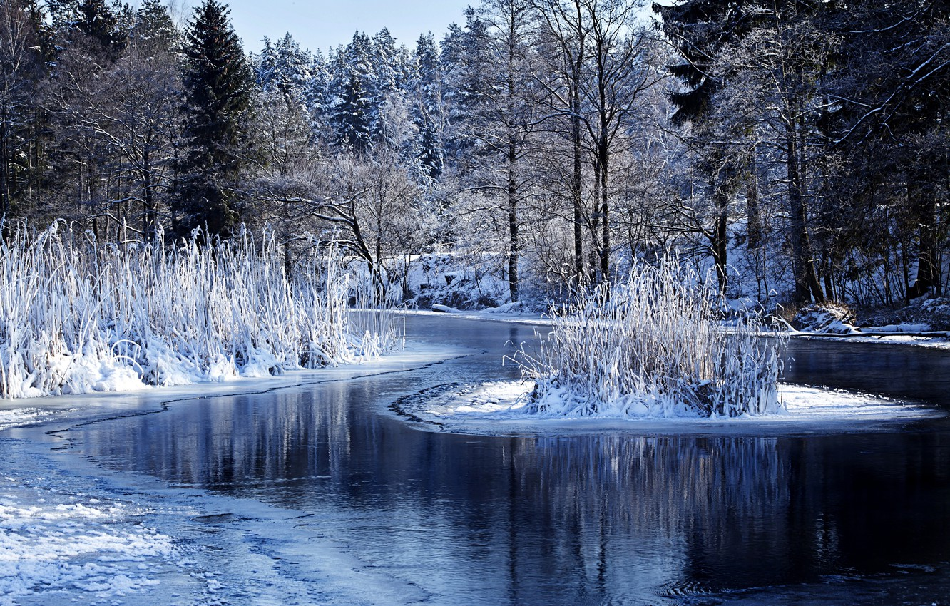 Photo wallpaper winter, forest, water, snow, trees, nature, lake, the bushes