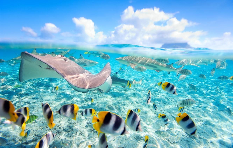 Wallpaper Sea Fish Tropics The Ocean Underwater Sea