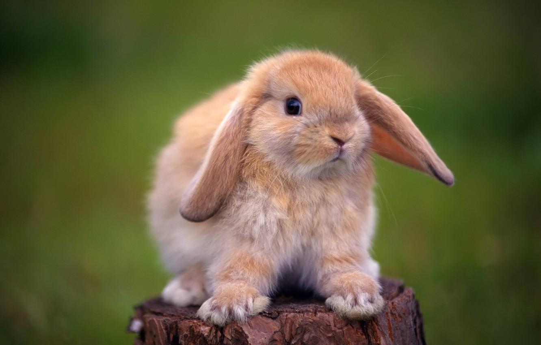 Photo wallpaper stump, rabbit, decorative