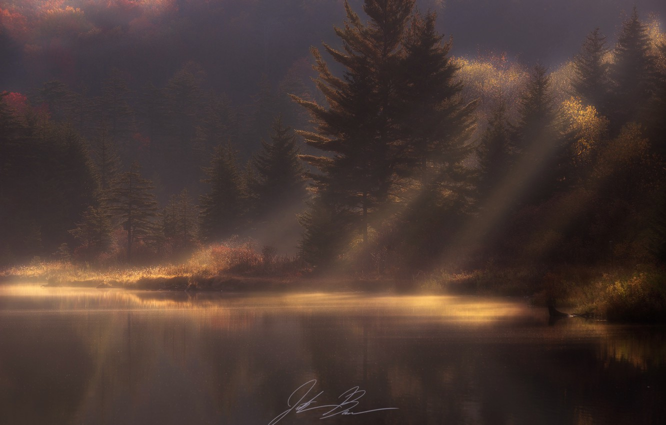 Photo wallpaper autumn, forest, light, nature, morning, haze, pond