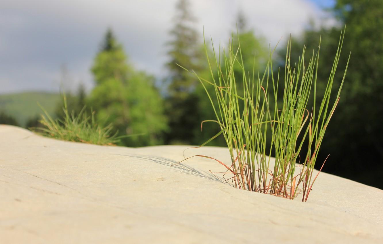 Photo wallpaper grass, stones, minimalism, Zen