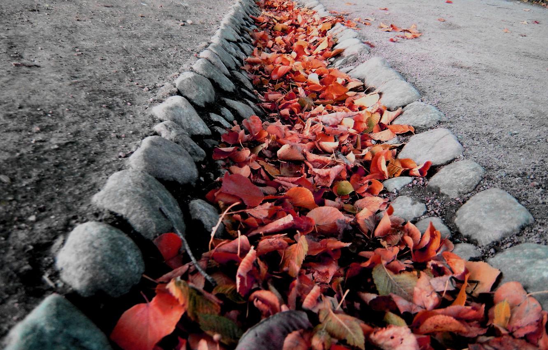 Photo wallpaper autumn, leaves, track