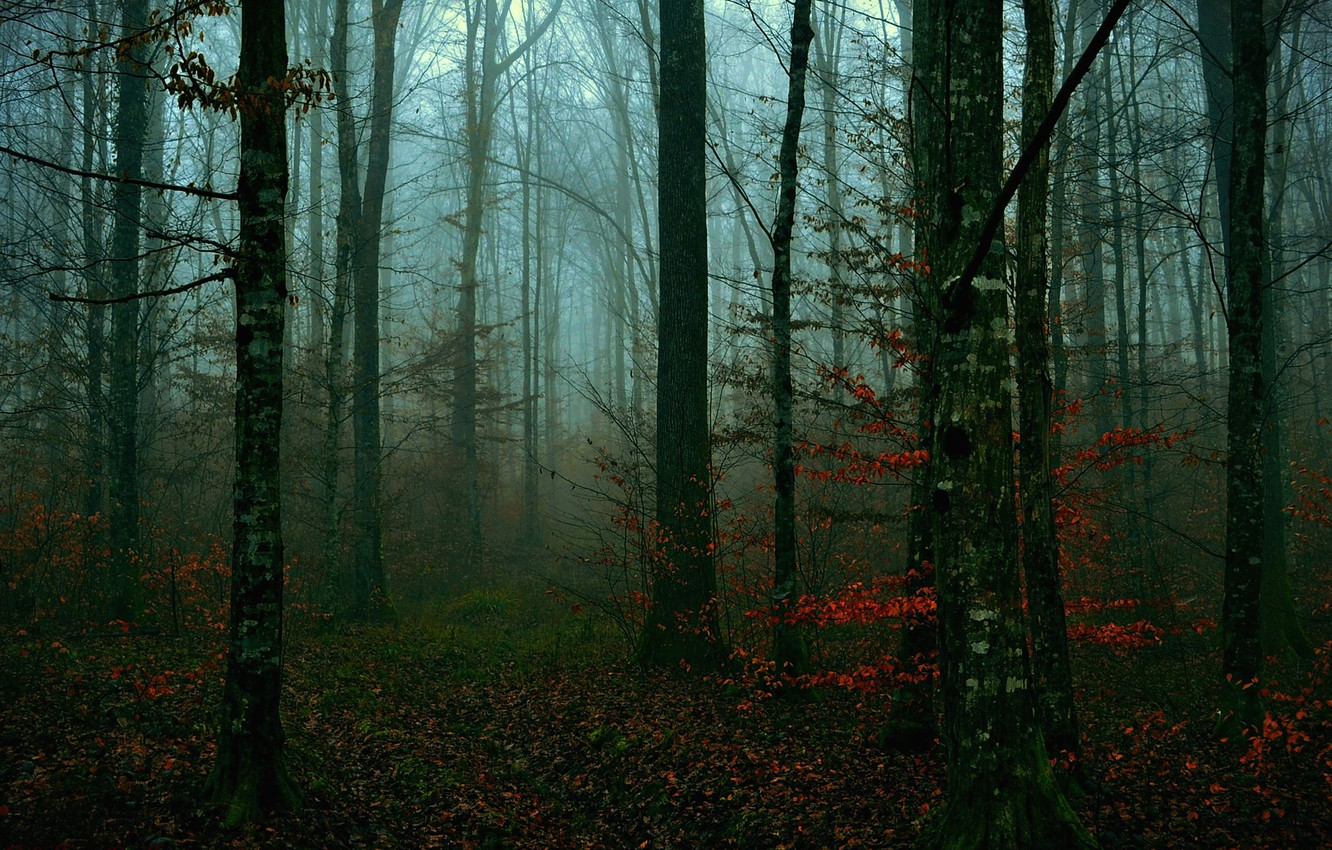 Photo wallpaper autumn, forest, leaves, trees, the evening