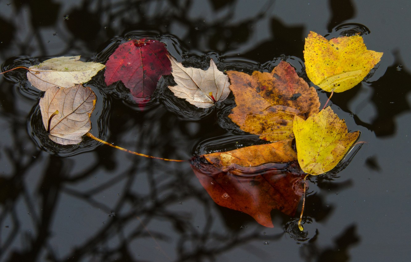 Photo wallpaper autumn, leaves, water, surface