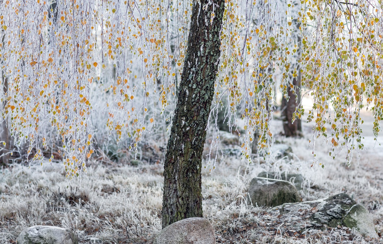 Photo wallpaper frost, autumn, leaves, tree