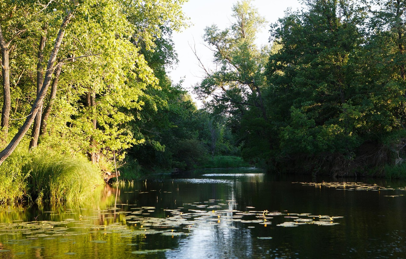 Photo wallpaper greens, summer, trees, morning, river, the bushes, water lilies