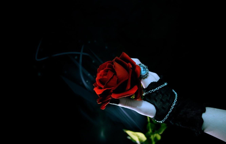 Wallpaper Rose Hand Black Background Images For Desktop Section Cvety Download
