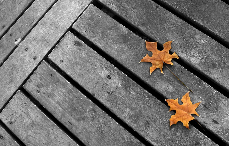 Photo wallpaper autumn, grey background, yellow maple leaves, minimalism. grey Board