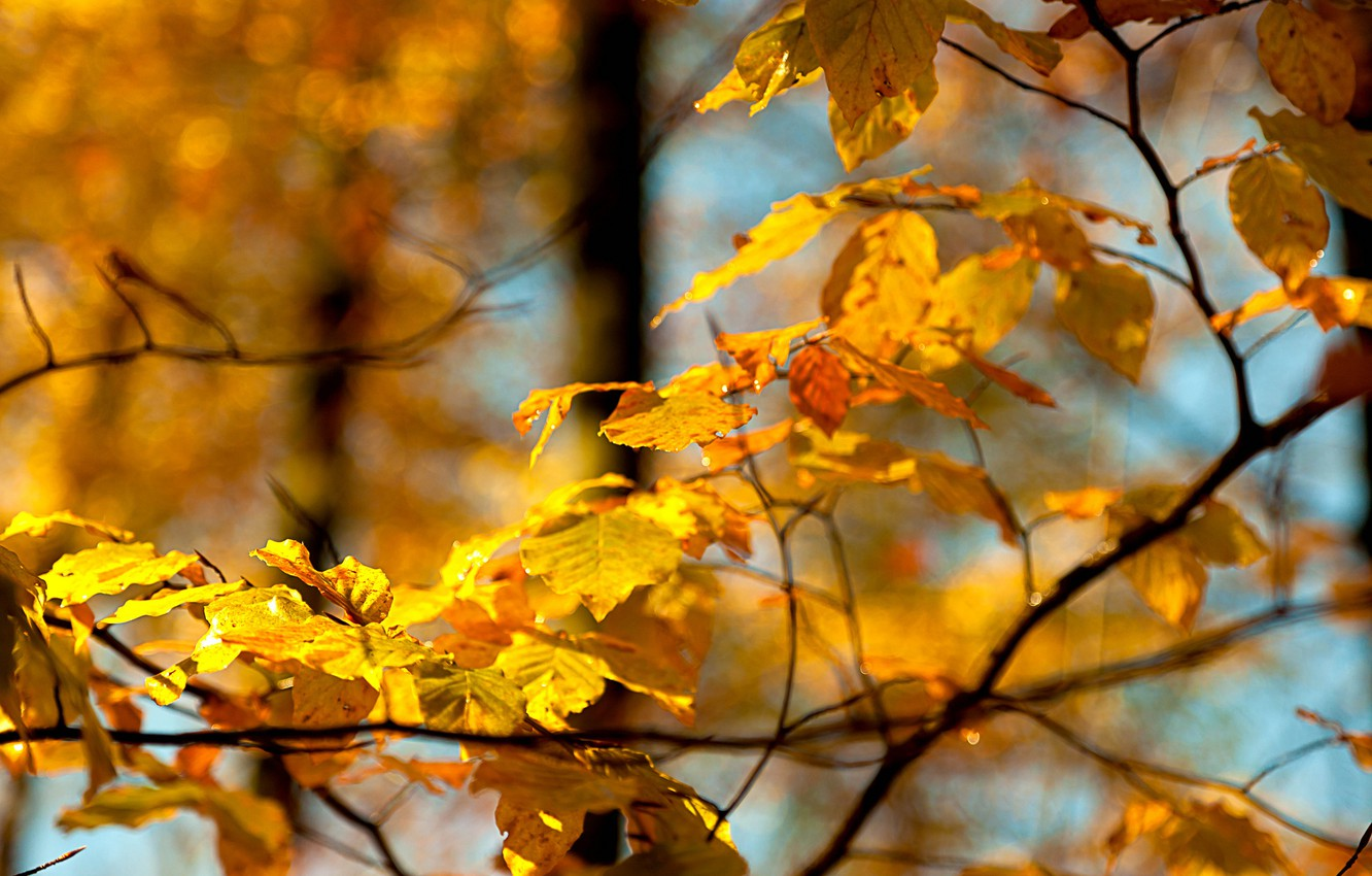 Photo wallpaper autumn, the sky, leaves, macro, branch