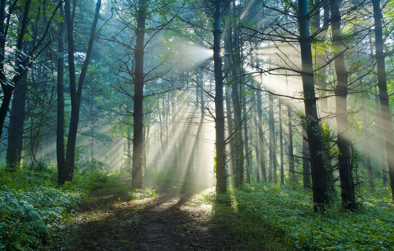 Photo wallpaper forest, summer, the sun, rays, light, nature, trail, morning