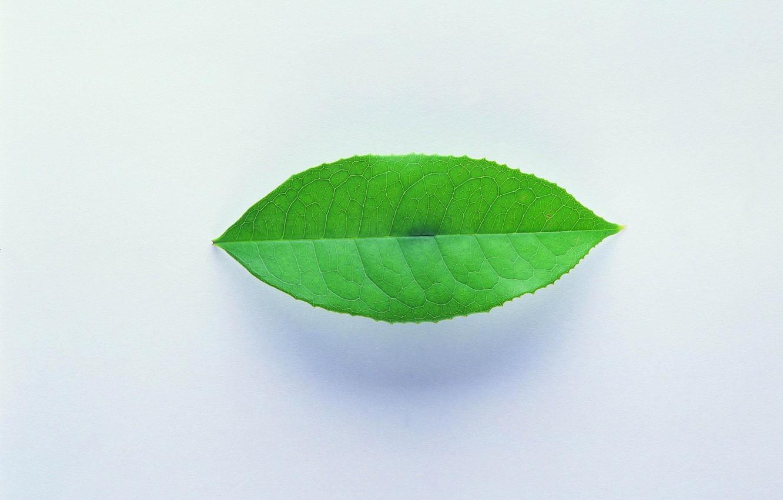 Photo wallpaper sheet, green, shadow