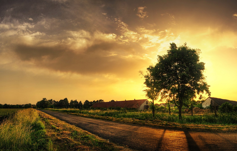 Photo wallpaper road, grass, tree, 152