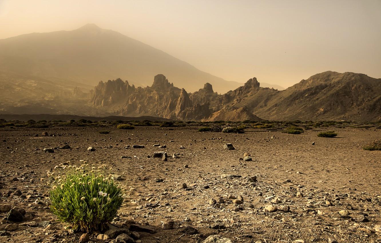 Photo wallpaper grass, landscape, nature, desert