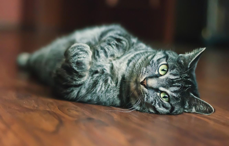 Photo wallpaper cat, eyes, cat, look, macro, wool, blur, face