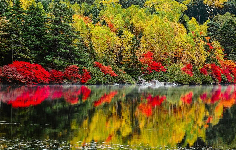 Photo wallpaper autumn, trees, landscape, nature, lake, forest