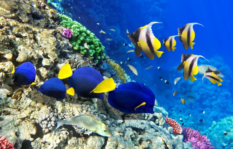 Photo wallpaper fish, bubbles, figure, ship, corals, under water