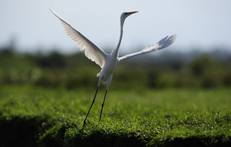 Photo wallpaper nature, bird, dance, flight