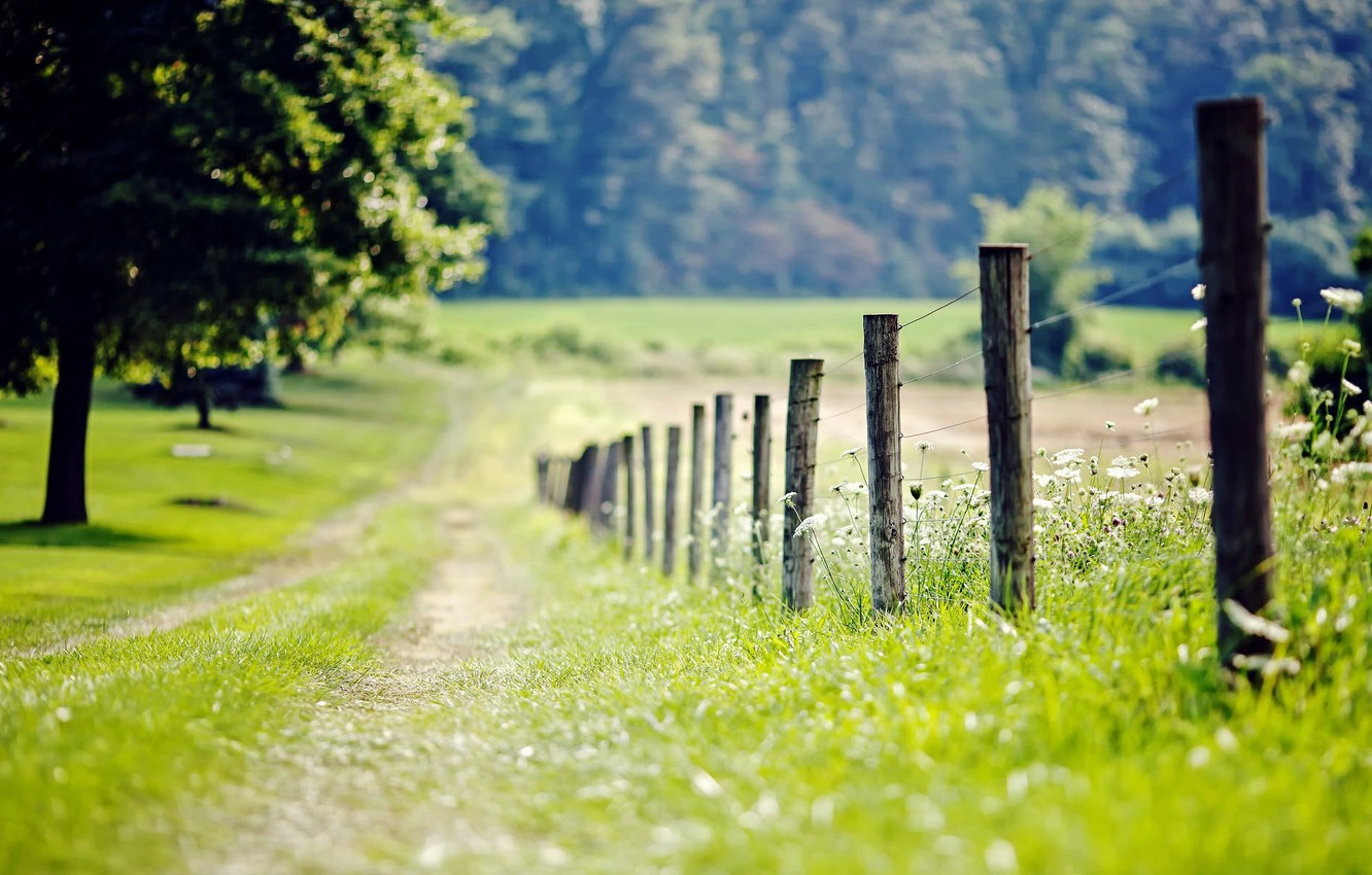 Photo wallpaper greens, grass, leaves, trees, flowers, nature, background, tree, Wallpaper, foliage, the fence, blur, fence, meadow, …