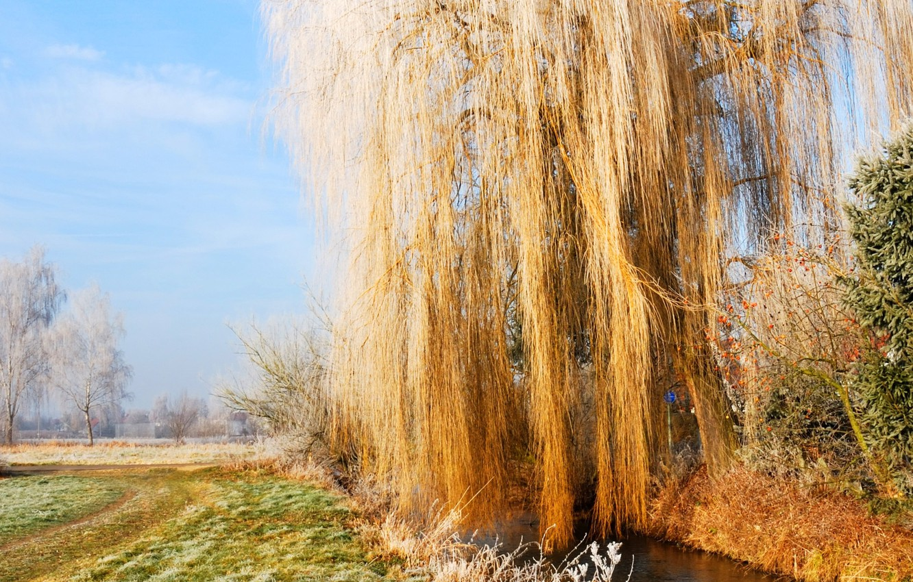 Photo wallpaper frost, autumn, the sky, grass, IVA