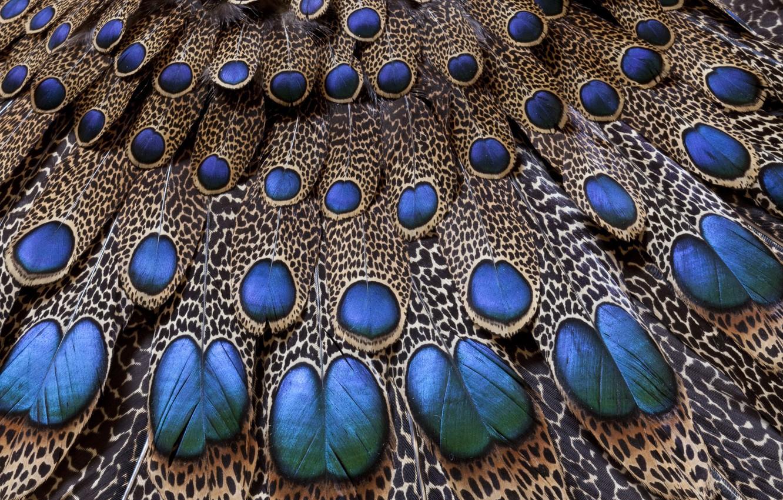 Photo wallpaper pattern, tail, peacock