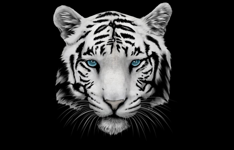 Photo wallpaper white, mustache, face, tiger, head, tiger