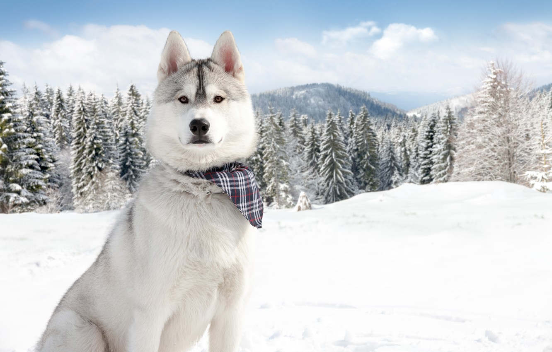 Photo wallpaper winter, snow, nature, Dogs