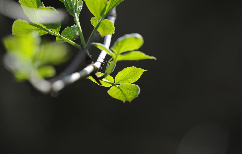 Photo wallpaper greens, macro, plant, branch. leaves