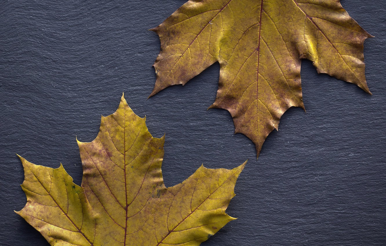 Photo wallpaper autumn, leaves, background