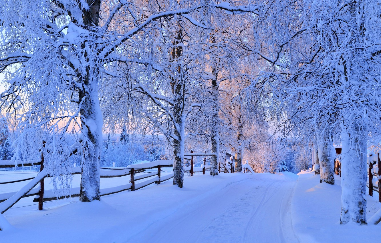 Photo wallpaper winter, road, forest, the sky, snow, trees, landscape, nature, white, forest, road, sky, trees, nature, …